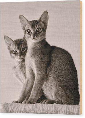Abyssinian Kittens Wood Print