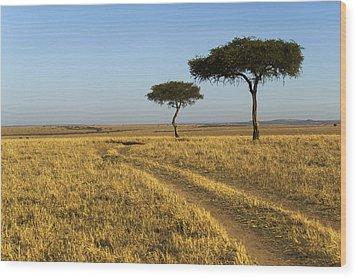 Acacia Trees In The Maasai Mara Wood Print by Nigel Hicks