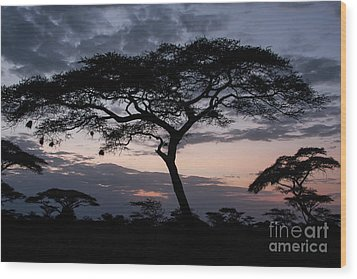 Acacia Trees Sunset Wood Print