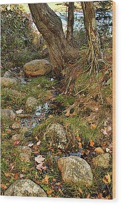 Acadia Fall Foliage Wood Print by Alexander Mendoza