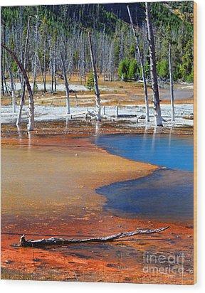Acid Soup Yellowstone Wood Print