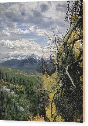 Acorn Creek Trail Wood Print