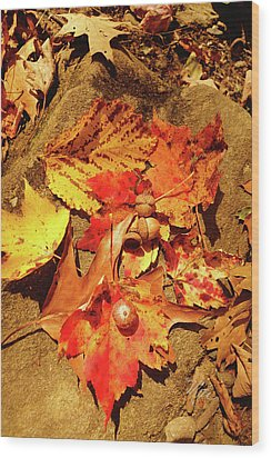 Wood Print featuring the photograph Acorns Fall Maple Leaf by Meta Gatschenberger