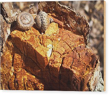 Acorns - The Cycle Of Life Continues  Wood Print by Shawna Rowe