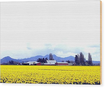Acres Of Daffodils Wood Print by Will Borden