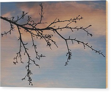 Wood Print featuring the photograph Across A December Sky by Marilynne Bull