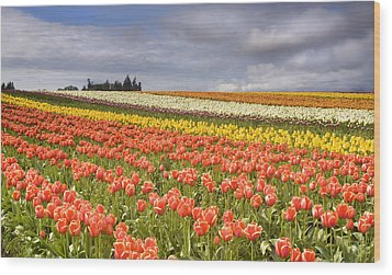 Across Colorful Fields Wood Print by Mike  Dawson