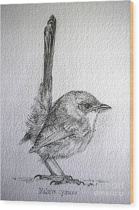 Adolescent Blue Wren Wood Print