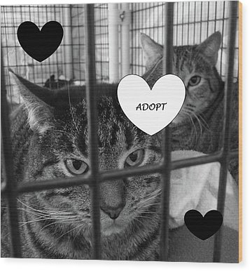 Adopt Wood Print by Mary Ellen Frazee