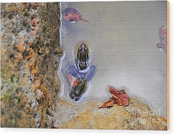 Wood Print featuring the photograph Adopted Amphibian by Al Powell Photography USA