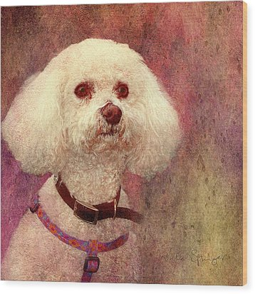Adoration - Portrait Of A Bichon Frise  Wood Print