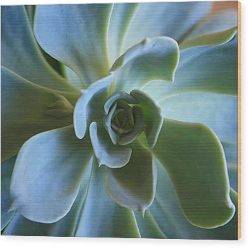 Aeonium Wood Print by Marna Edwards Flavell
