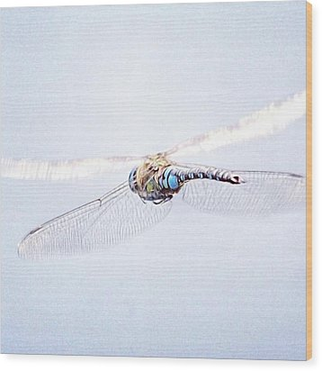 Aeshna Juncea - Common Hawker In Wood Print by John Edwards