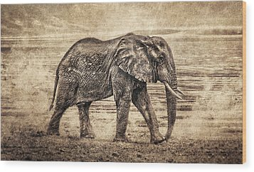 Africa Series - Elephant Wood Print by Brett Pfister