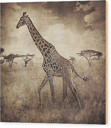 Africa Series - Giraffe Wood Print by Brett Pfister