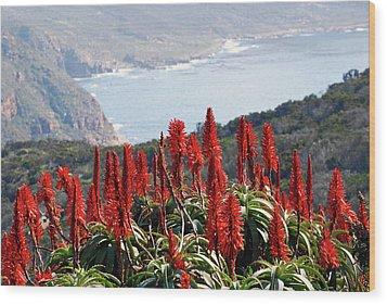 African Aloe And False Bay Wood Print