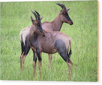 African Antelopes Wood Print