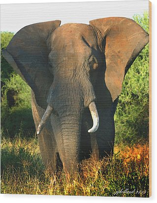 African Bull Elephant Wood Print