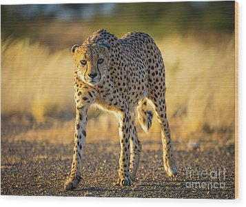African Cheetah Wood Print by Inge Johnsson