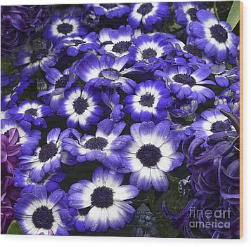 African Daisy Purple And White Wood Print