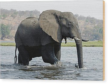 African Elephant - Bathing Wood Print by Robert Shard