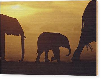 African Elephant Loxodonta Africana Wood Print by Karl Ammann