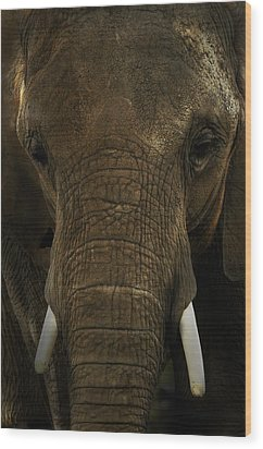 Wood Print featuring the photograph African Elephant by Michael Cummings