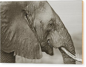 African Elephant Profile  Duotoned Wood Print by Liz Leyden