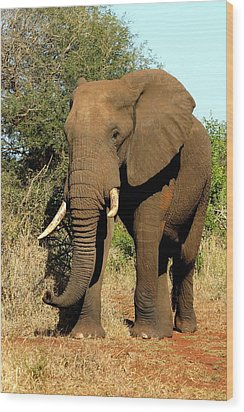 Wood Print featuring the photograph African Elephant by Riana Van Staden