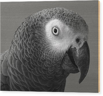 African Gray Wood Print