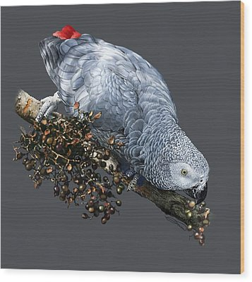 African Grey Parrot A Wood Print by Owen Bell