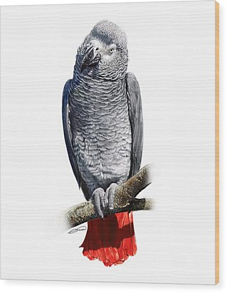 African Grey Parrot C Wood Print by Owen Bell