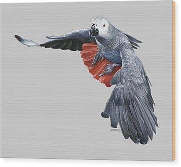 African Grey Parrot Flying Wood Print by Owen Bell