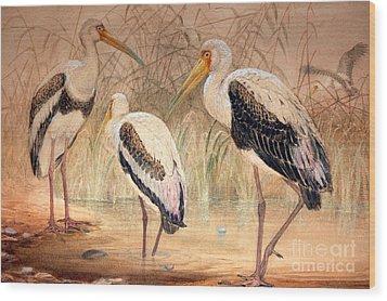 African Tantalus Pseudotantalus Ibis Wood Print