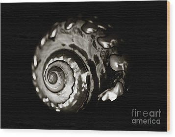 African Turbo Shell - Sepia Tone Wood Print by Charmian Vistaunet
