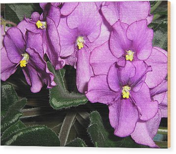 African Violets Wood Print by Barbara Yearty