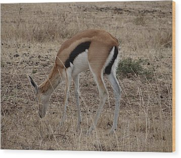 African Wildlife 4 Wood Print