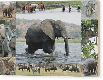 African Wildlife Montage - Elephant Wood Print by Robert Shard