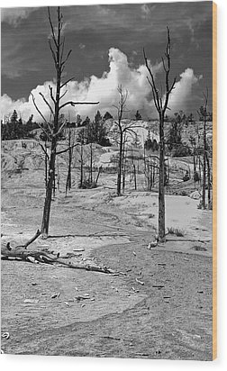 Wood Print featuring the photograph After The Fire by Nigel Fletcher-Jones