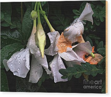 After The Rain - Flower Photography Wood Print