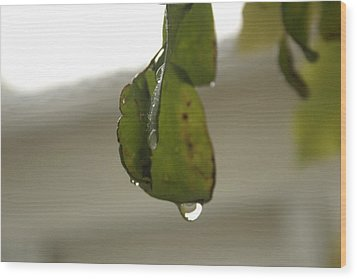 After The Rain Wood Print by Leonor Shuber