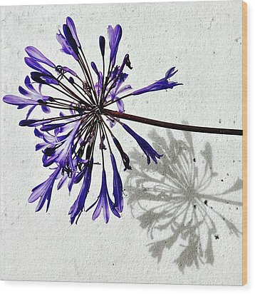 Agapanthus Wood Print by Julie Gebhardt