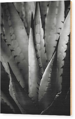 Agave And Patterns Wood Print by Eduard Moldoveanu