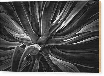 Agave Burst Wood Print