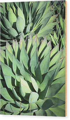 Agave Wood Print by Catherine Lau