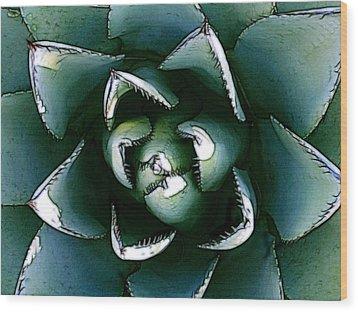 Agave Century Cactus Wood Print