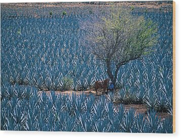 Agave Wood Print by Christian Heeb