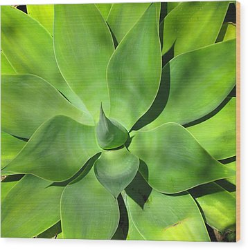 Agave Delight Wood Print by Candace Garcia