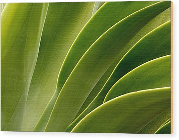 Agave Wood Print by Eric Foltz