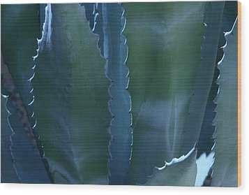 Agave Wood Print by Jerry Cave